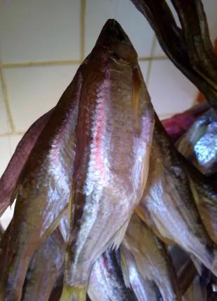 Риба,таранька(верхоплавка річкова)з р.Дністер(свіжа)з ікрою.