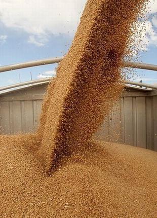 Перевозка зерновых грузов. Транспорт для перевозки зерна.