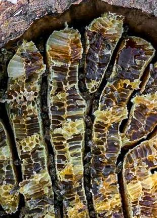 Мёд диких пчёл ( Бортевой мёд)100% натуральный продукт БЕЗ САХАРА