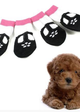 Носки для мелких пород собак или для кошки 4 шт 3149-22