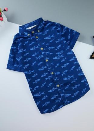 Рубашка h&m 5-6 лет/110-116 см