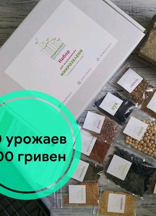 Набор для выращивания микрозелени дома Микрогрин microgreens
