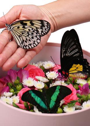 Круглая коробка с цветами и живыми бабочками