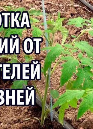 Защита и лечение растений от вредителей