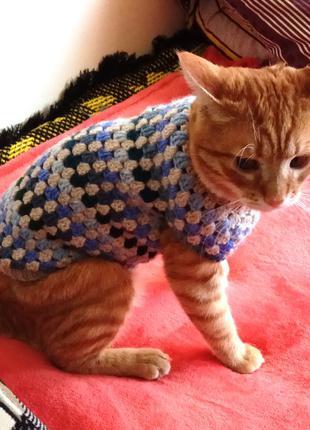 Свитер для кота Голубые полоски