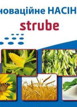 Семена подсолнечника Strube (Штрубе)