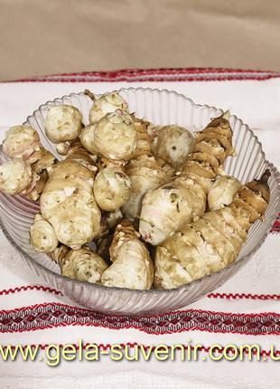 Топинамбур (земляная груша) Отборной крупный для еды
