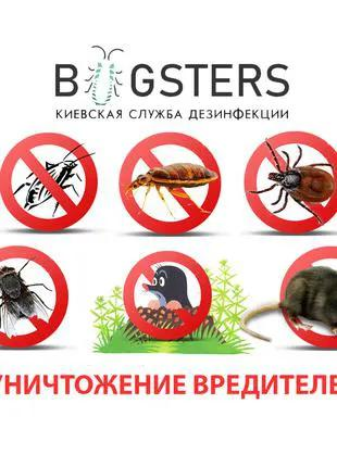 Уничтожение тараканов, клопов, клещей, крыс, мышей, муравьев