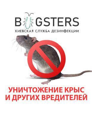 Уничтожение крыс, мышей и других вредителей. Дератизация