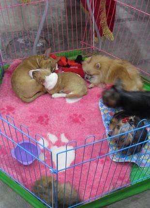 Манеж клетка для собак 120х60х63 с дверкой Бесплатная доставка!