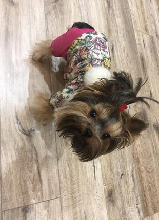 Зимняя курточка для собак мелкой породы🐶❄️