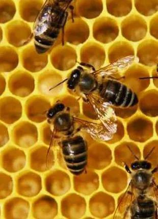 """Продам"""" правильный """"натуральный мед со своей пасеки"""