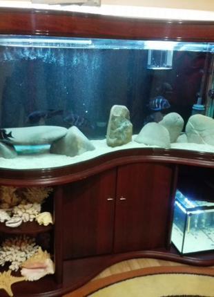 Фирменный аквариум волна с тумбой 430 литров