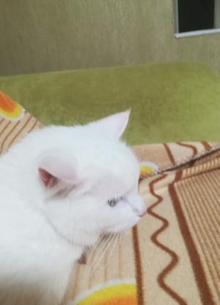Гостиница для котиков-круглосуточно на связи