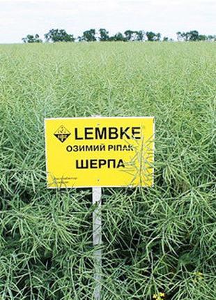 Насіння Ріпак(Семена рапса) озимий ШЕРПА LEMBKE