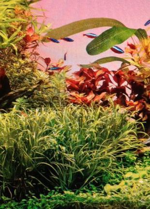 Продам набор аквариумных растений