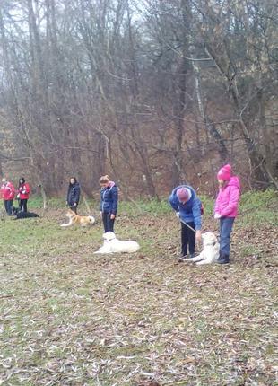 Дрессировка собак Киев и пригород