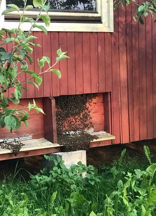 бджолина хата