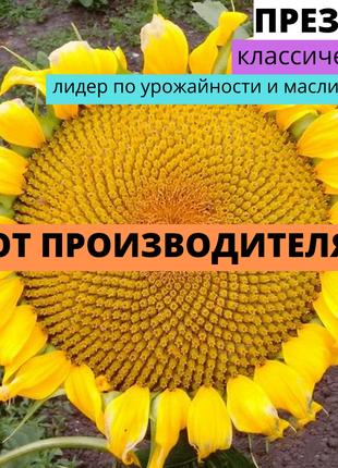Семена Подсолнечника Презент