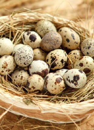 Продаю свіжі яйця цесарки!