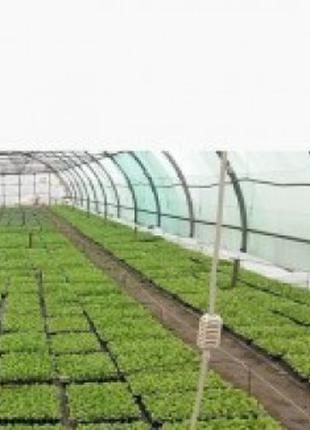 Продам готовую рассаду помидора ЯГ 8810 F1 / JAG 8810 F1