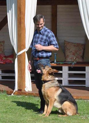 Кінолог з Коломиї,дресирування собак, он-лайн консультації. Кінол