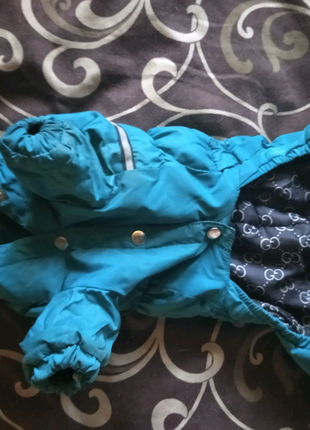 Одежда на Чихуахуа мальчик стандарт