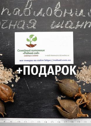 Павловния Shantong семена(около 2500шт)гибрид для древесины -25°С