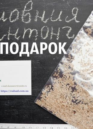 Павловния Шантонг семена (около 2500 шт) морозостойкий гибрид