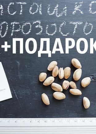 Семена фисташки 20 штук орехи для саженцев, насіння фісташкі