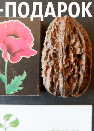 Орех серый семена 40 шт горіх сірий насіння родственник грецкого