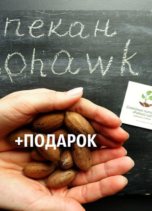 """Пекан (20 штук) сорт """"Mohawk""""(ранний) семена орех кария"""