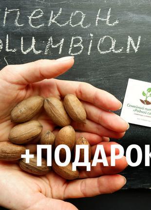 "Пекан (20 штук) сорт ""Columbian""  (поздний) семена орех кария"