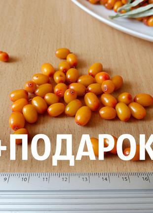 """Облепиха """"Чуйская"""" семена (80шт) (насіння для саджанців)семечка"""