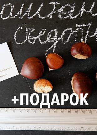 Каштан съедобный семена (8-10 грамм) 20 шт орехи