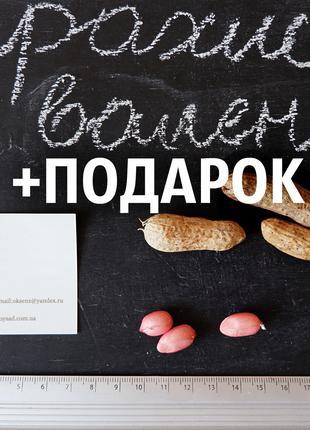 "Арахис сорт ""Валенсия"" 80 штук земляной орех семена насіння горіх"