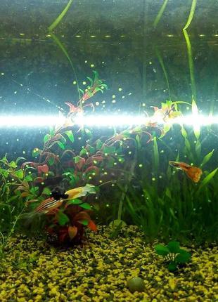 Светодиодные светильники для аквариума. Погружные лампы. Фитол...