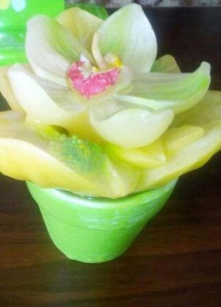 Свеча подарочная цветущий кактус