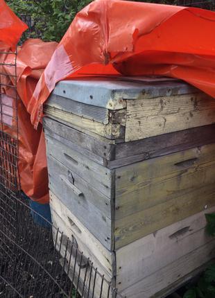 Пчелиные улья с рамками, улья