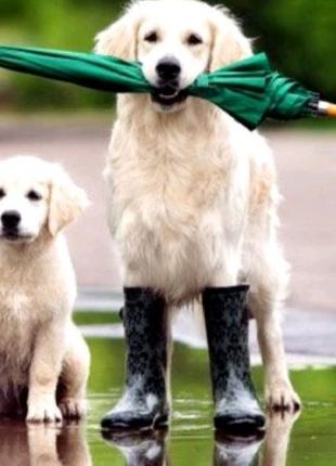 Вигул собак!!