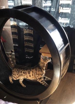 Колесо тренажёр для кота или собаки