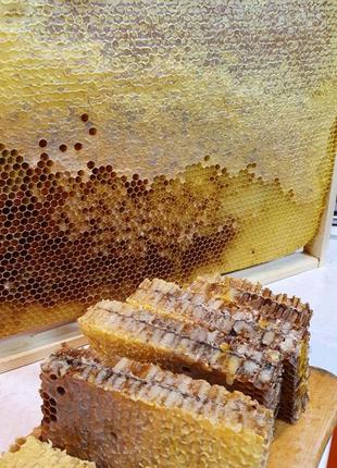 Мед в сотах сорт разнотравье