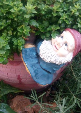 Гном садовый