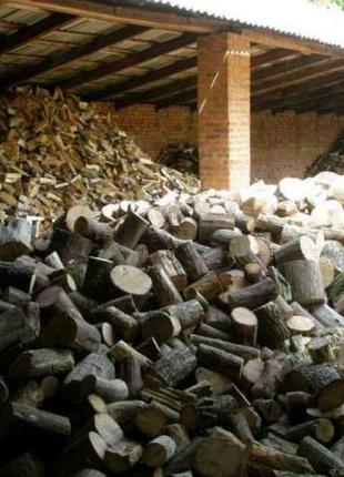 Рубаємо, зріжемо, поріжемо дерева та поколимо дрова