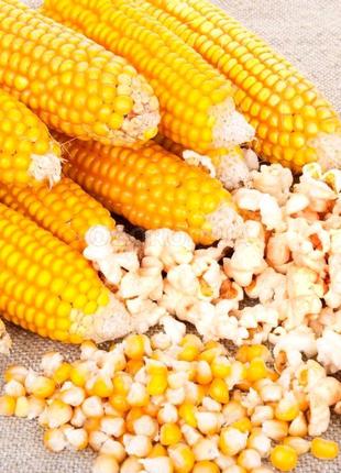 Зерно попкорна 10 кг