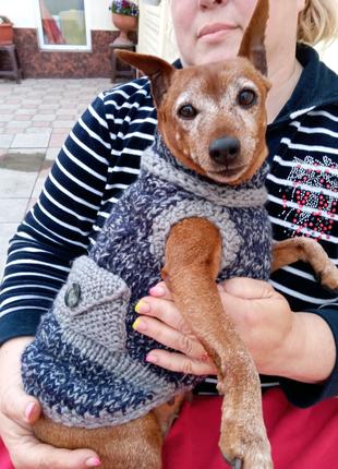 Вязаная одежда для собак мелких пород