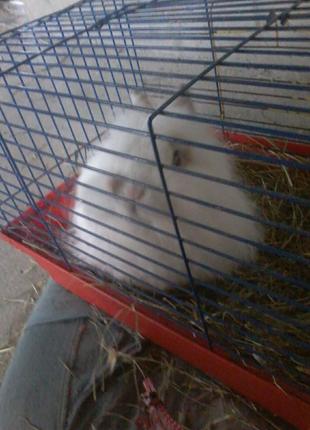 Декоративные кролики, крольчата