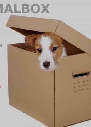 ANIMALBOX – коробочка-сюрприз для собак