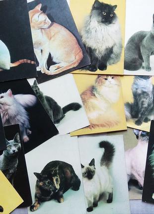 Кошки, обезьяны - Открытки, Календарики 2000-2001