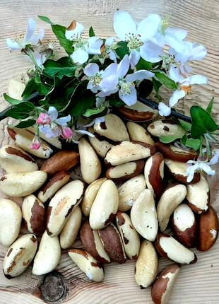 Бразильский орех бразильський горіх